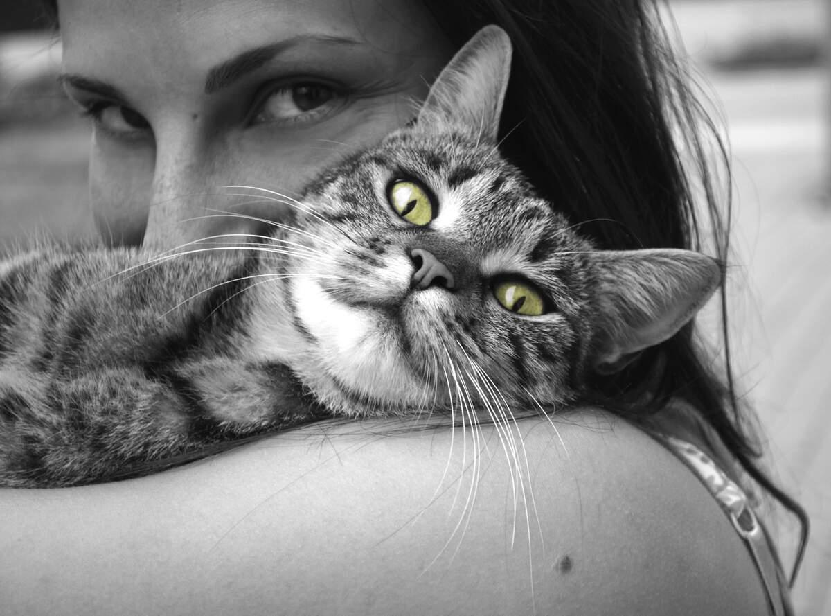 Image for National Pet Dental Health Month