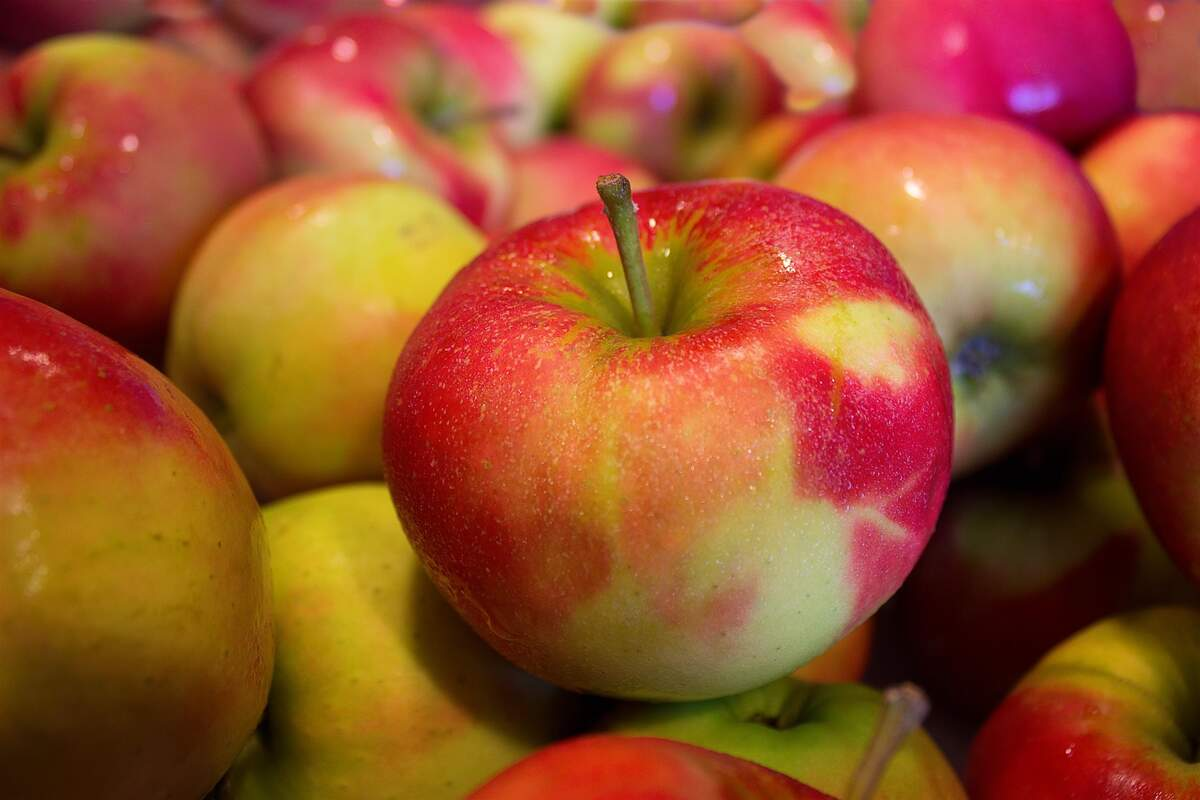 Image for Apple Day