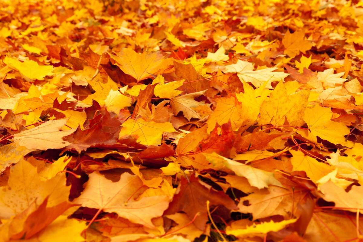 Image for The First Day of Fall