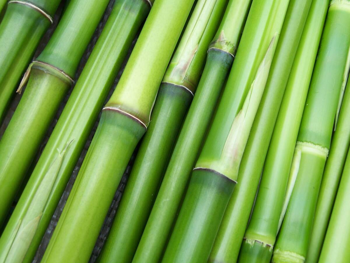 Image for World Bamboo Day