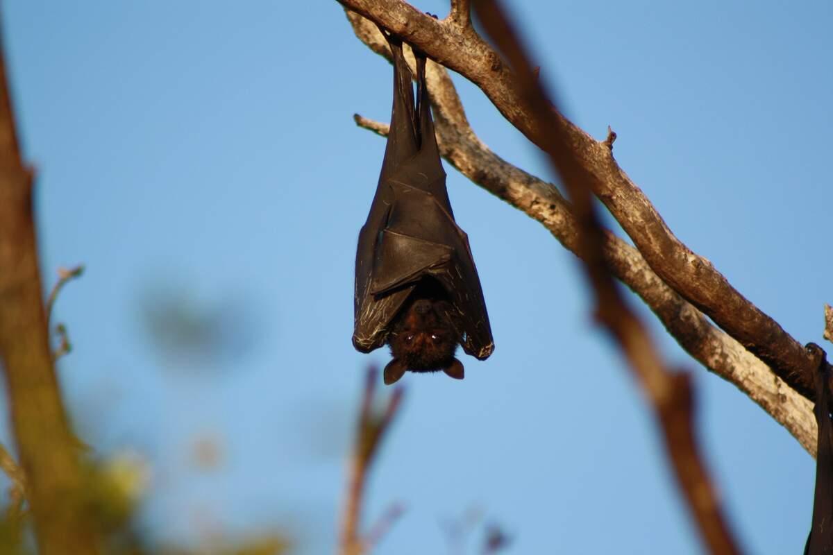 Image for Bat Appreciation Day