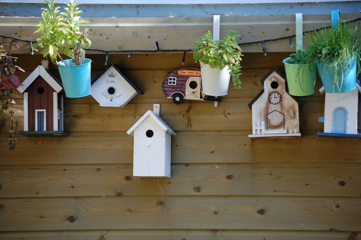 Image for National Nestbox Week (UK)