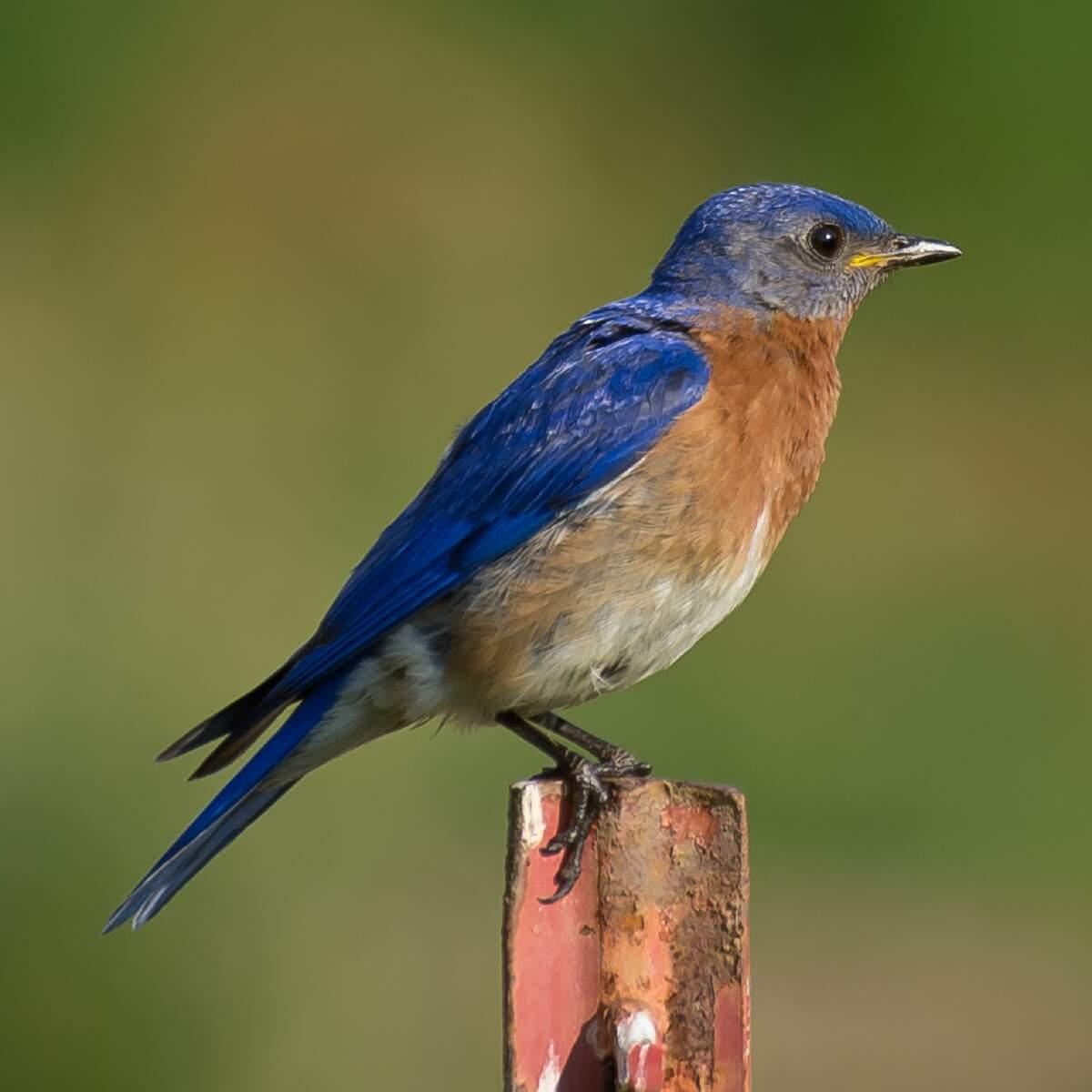 Image for Audubon Day
