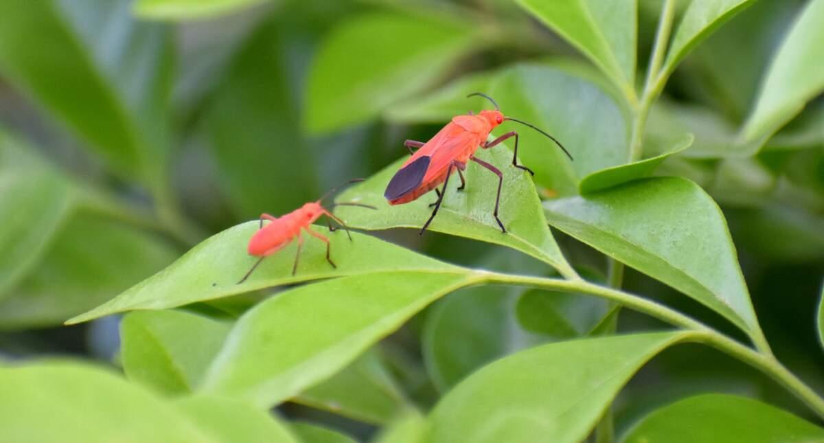 Image for National Invasive Species Awareness Week