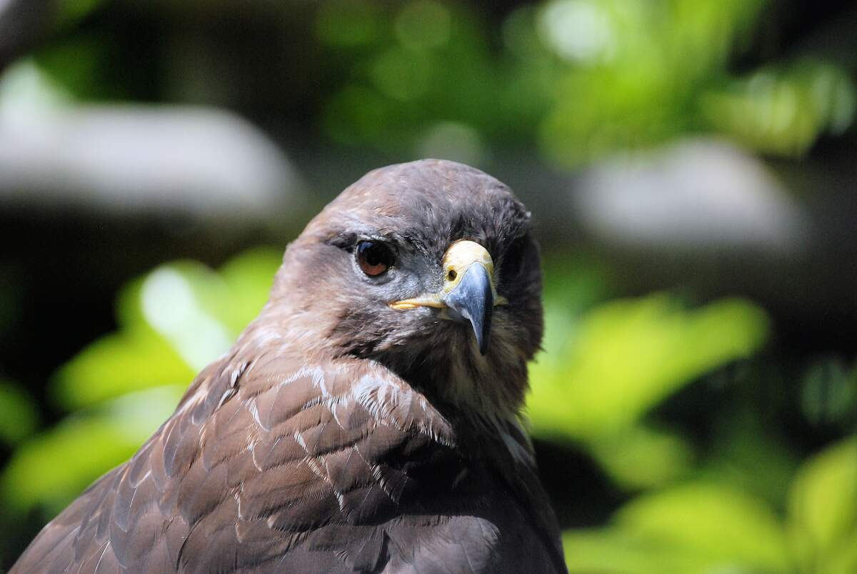 Image for Buzzard Day