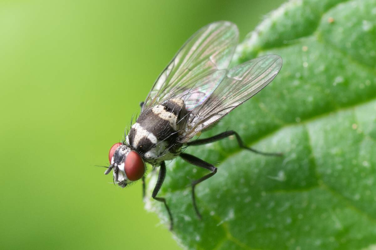Image for Fight the Filthy Fly Month