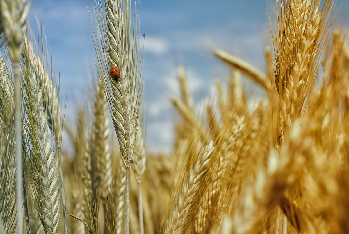 Image for Whole Grains Month