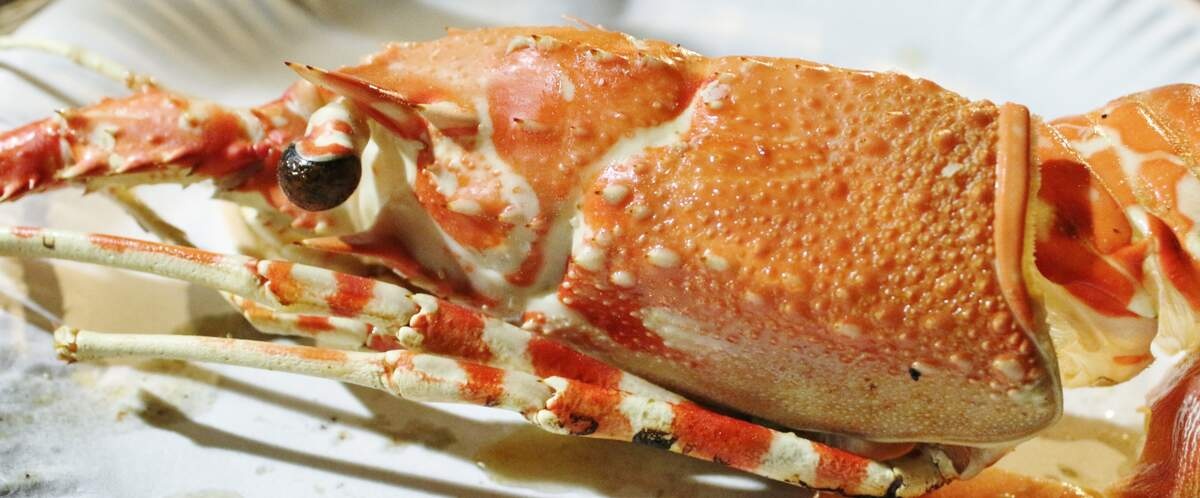Image for National Lobster Day