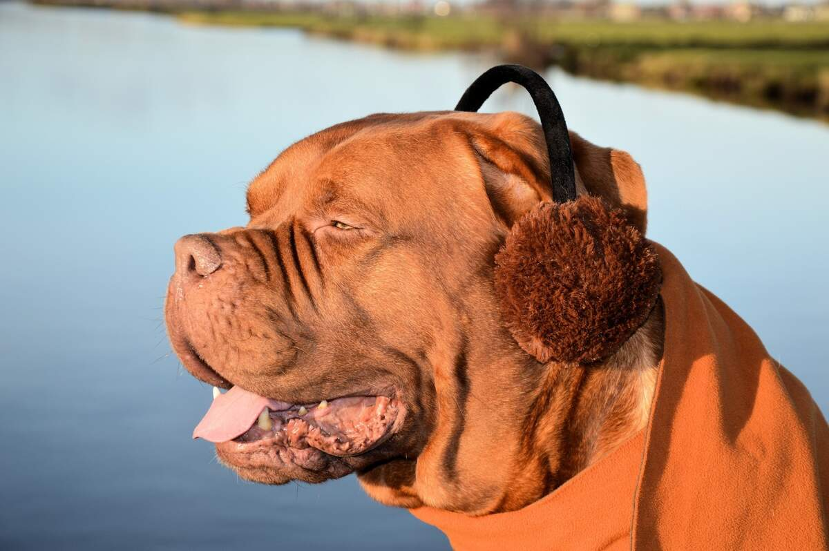 Image for Earmuff Day