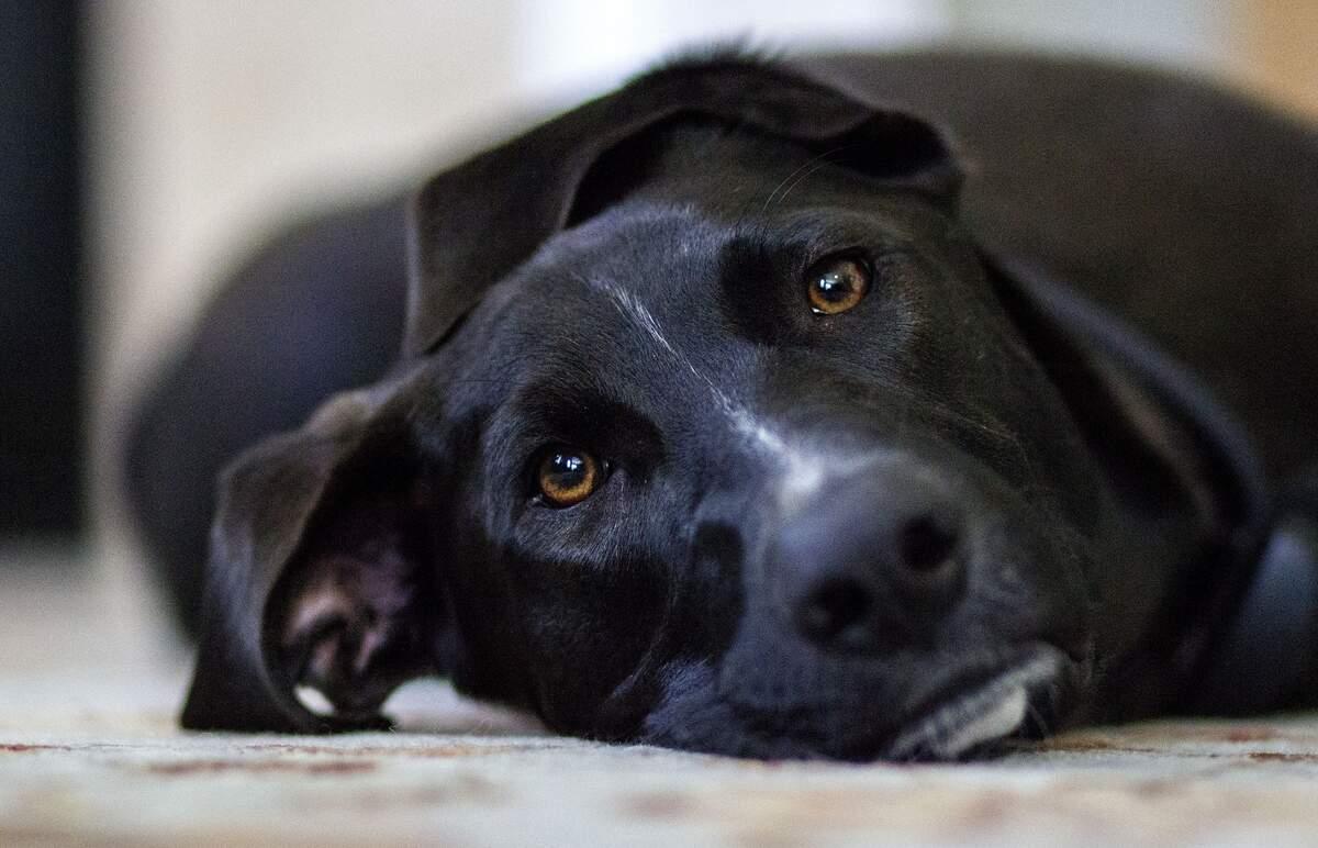 Image for National Black Dog Day