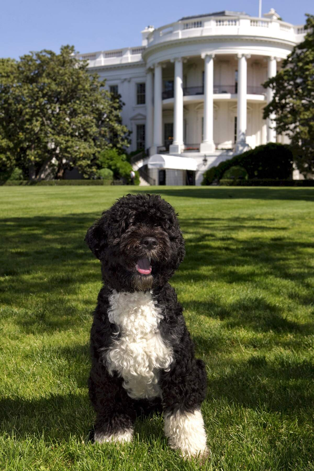 Image for National Dogs in Politics Day