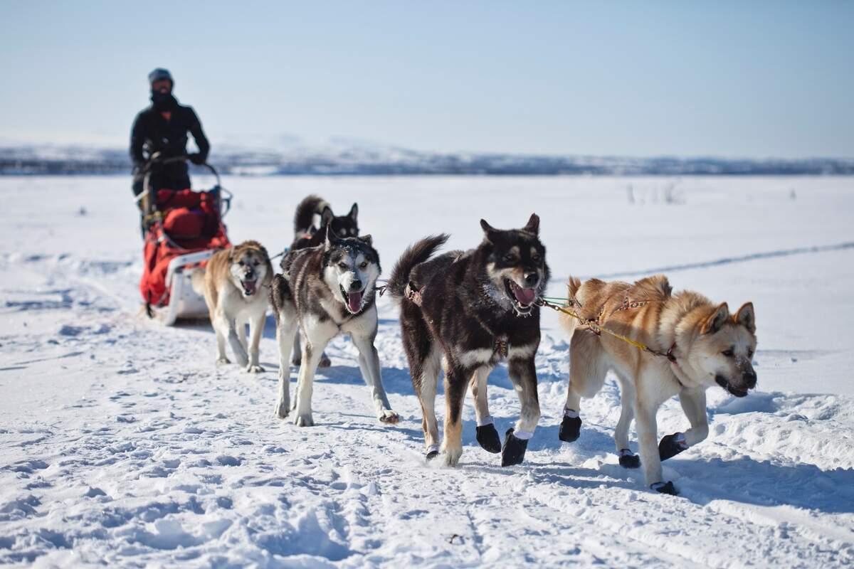Image for Sled Dog Day