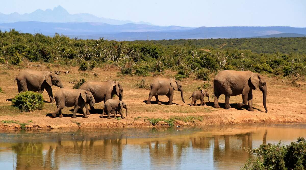 Image for National Wildlife Ecology Day