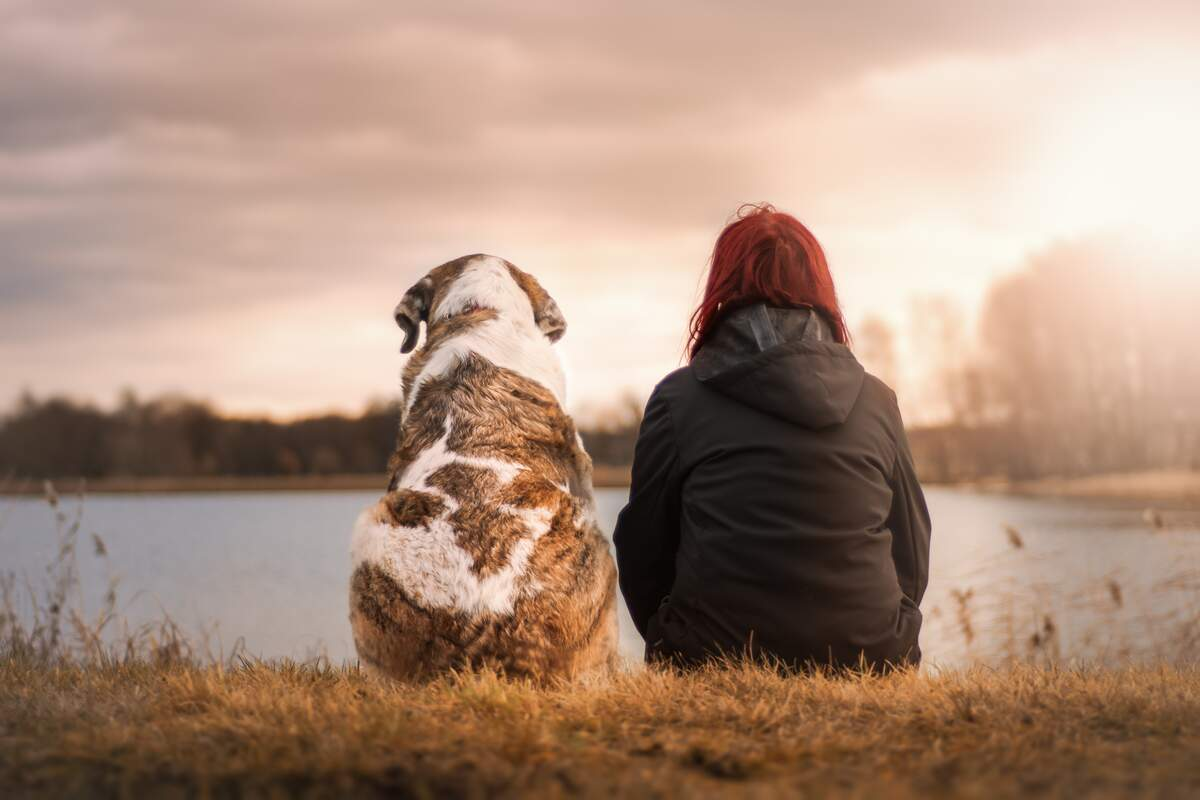 Image for Doggy Date Night