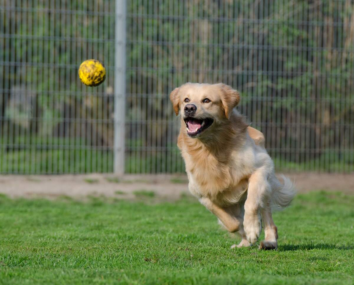 Image for National Fetch Day