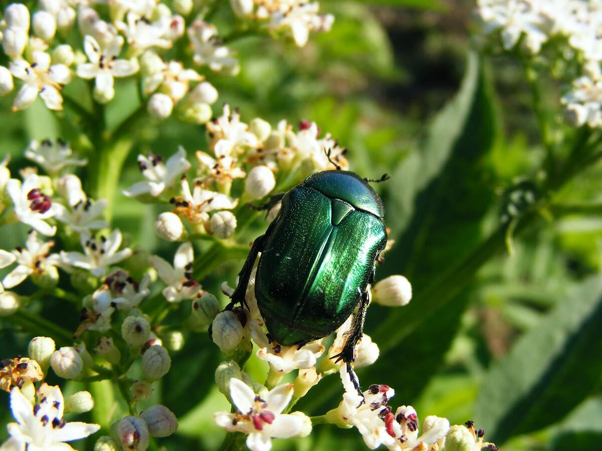 Image for June Bug Day