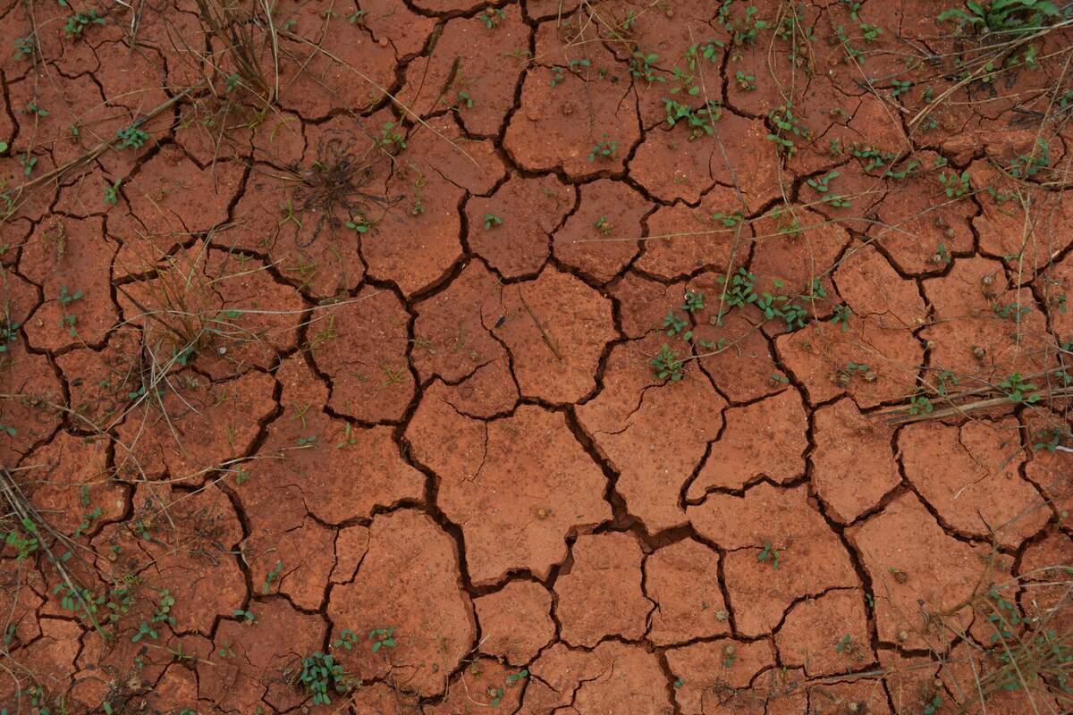 Image for World Day to Combat Desertification and Drought