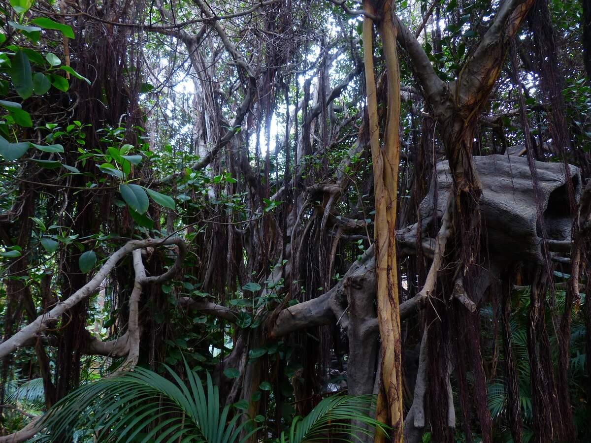 Image for Tarzan Day