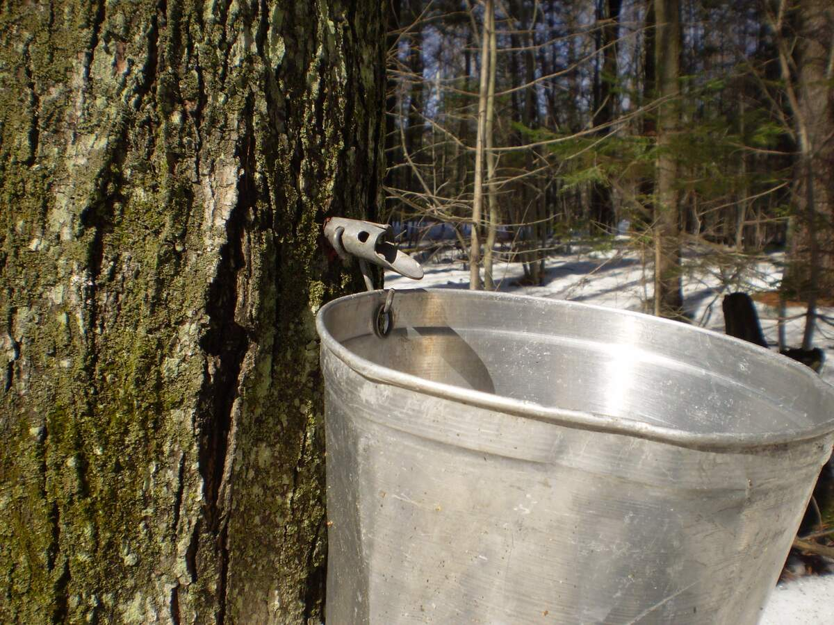 Image for National Maple Syrup Day