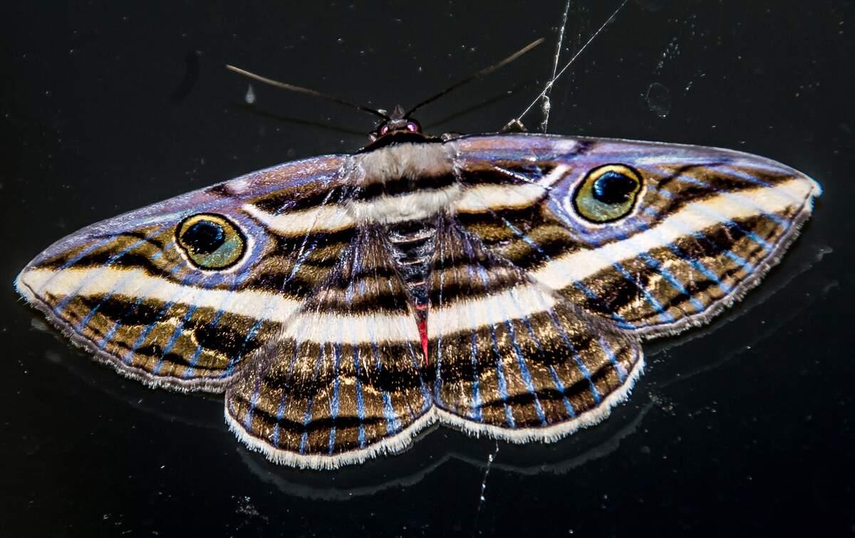 Image for National Moth Week