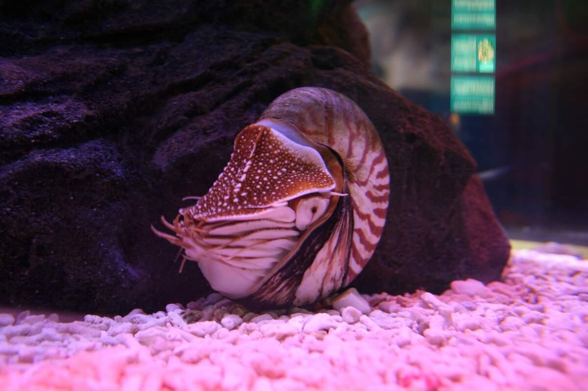 Image for Nautilus Night
