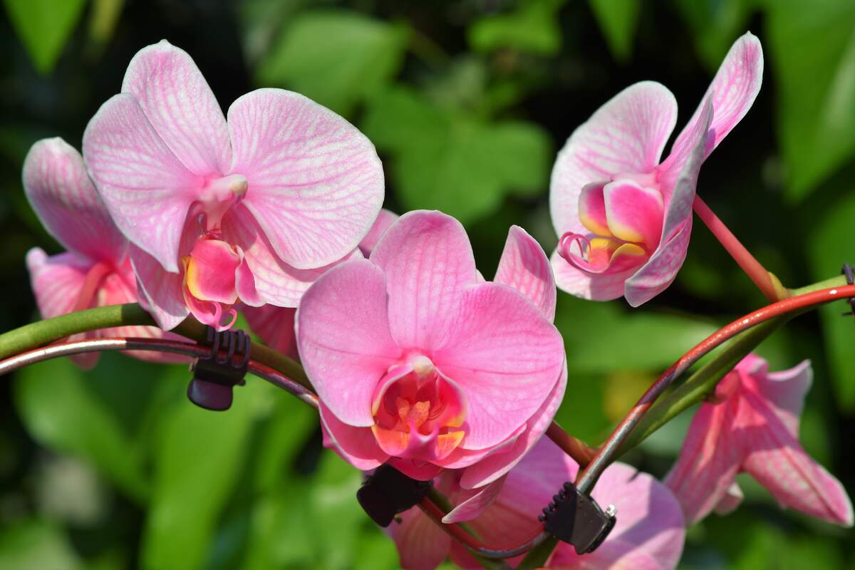Image for National Orchid Day