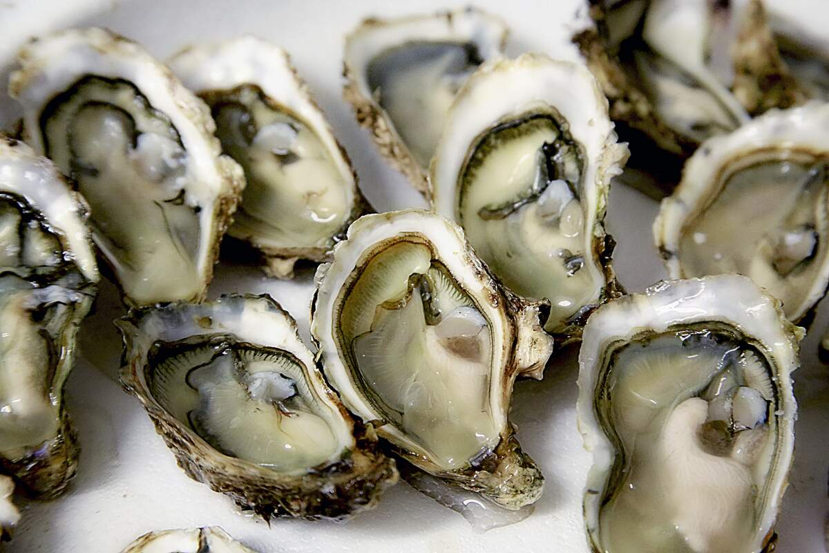 Image for Oyster Day