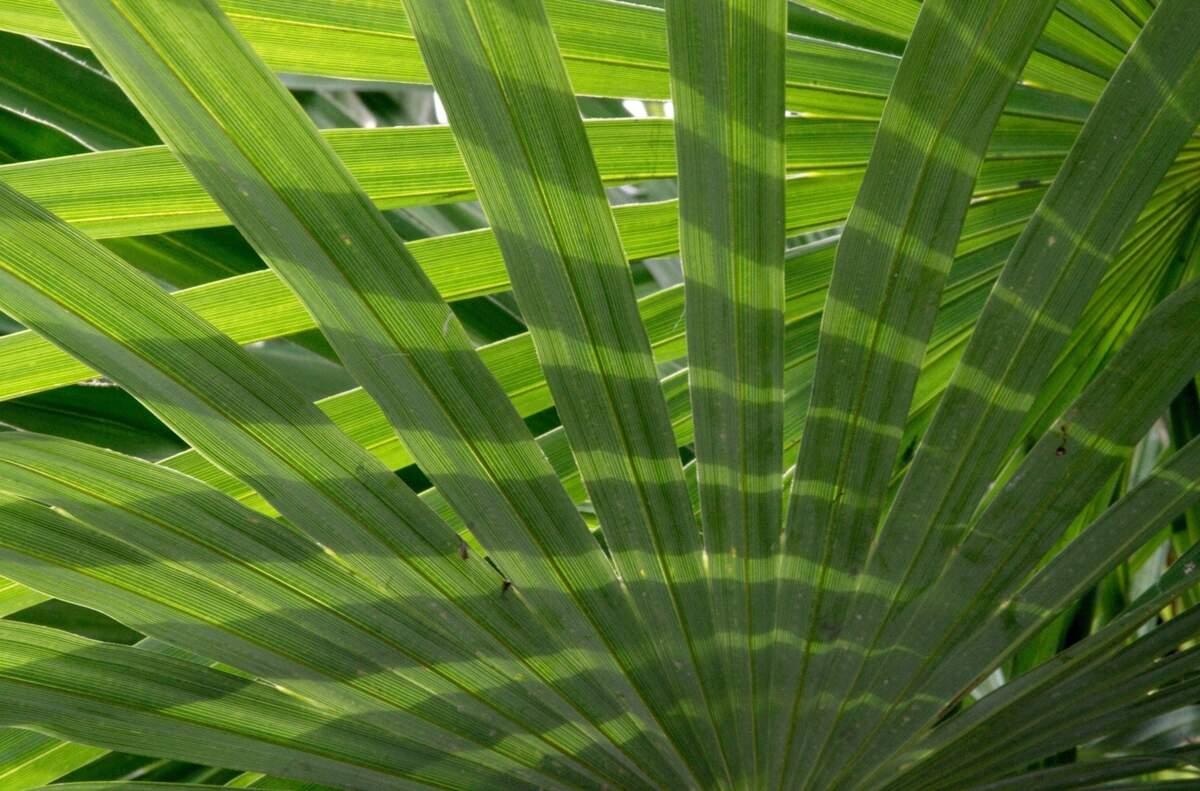 Image for Palm Sunday
