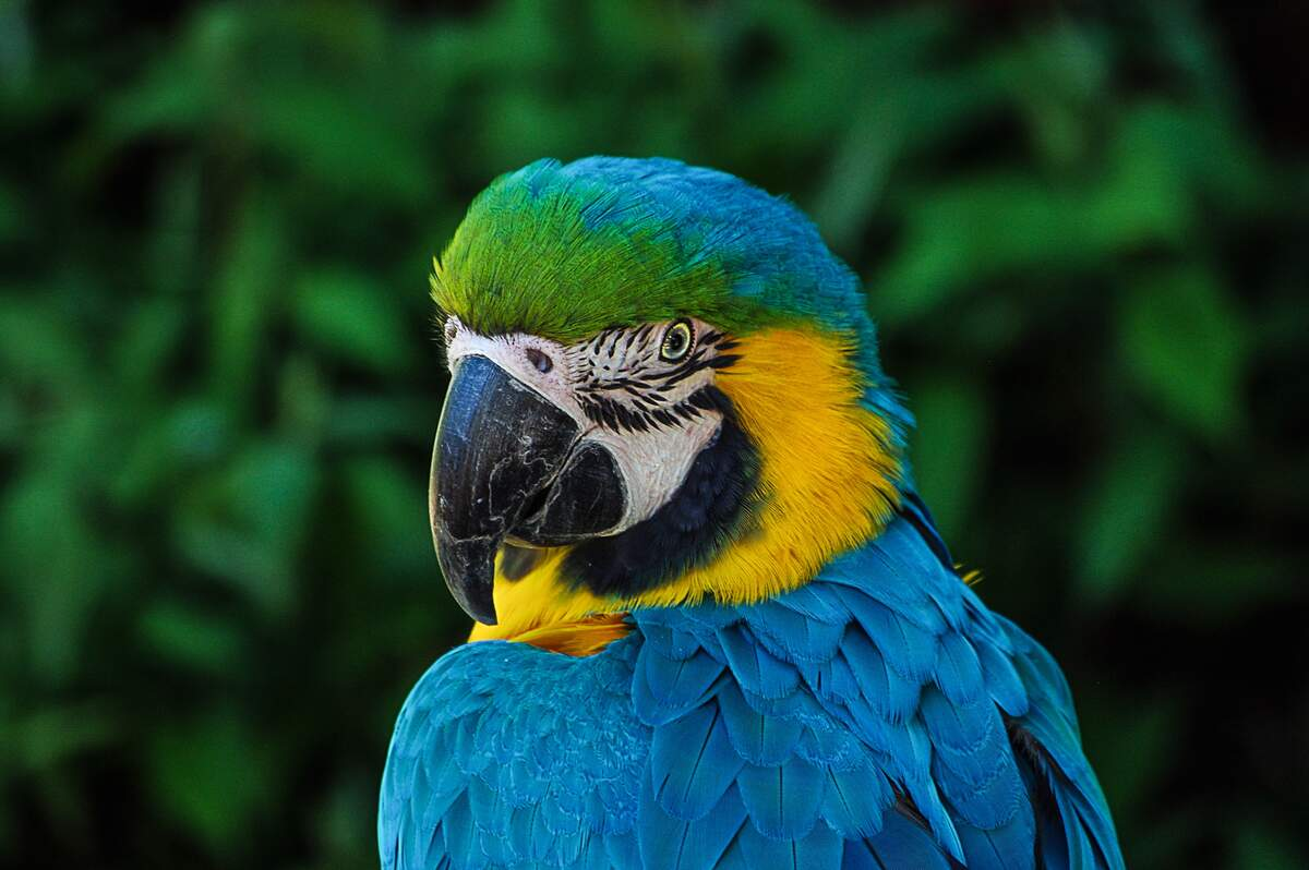Image for World Parrot Day