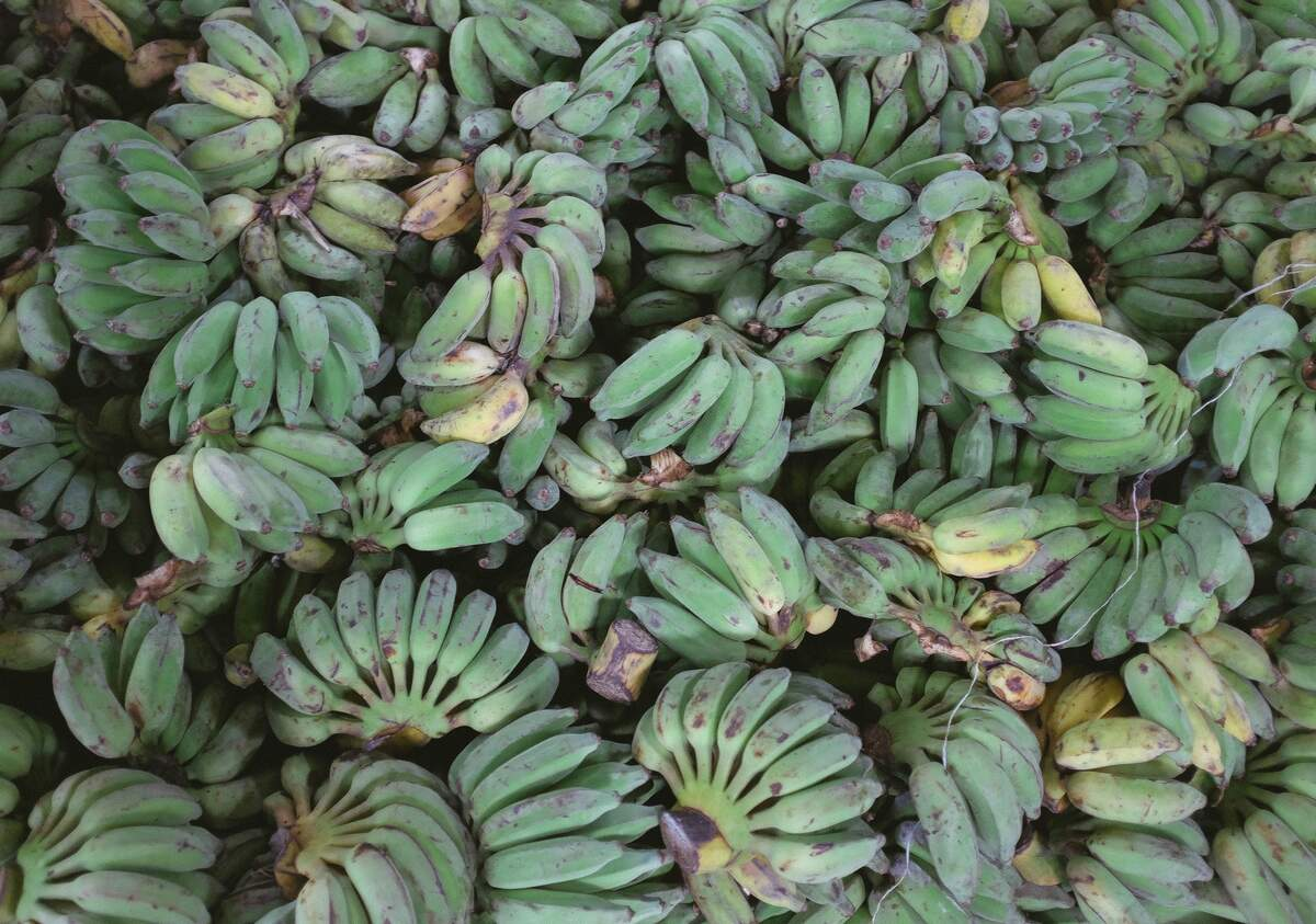 Image for Greens and Plantains Month
