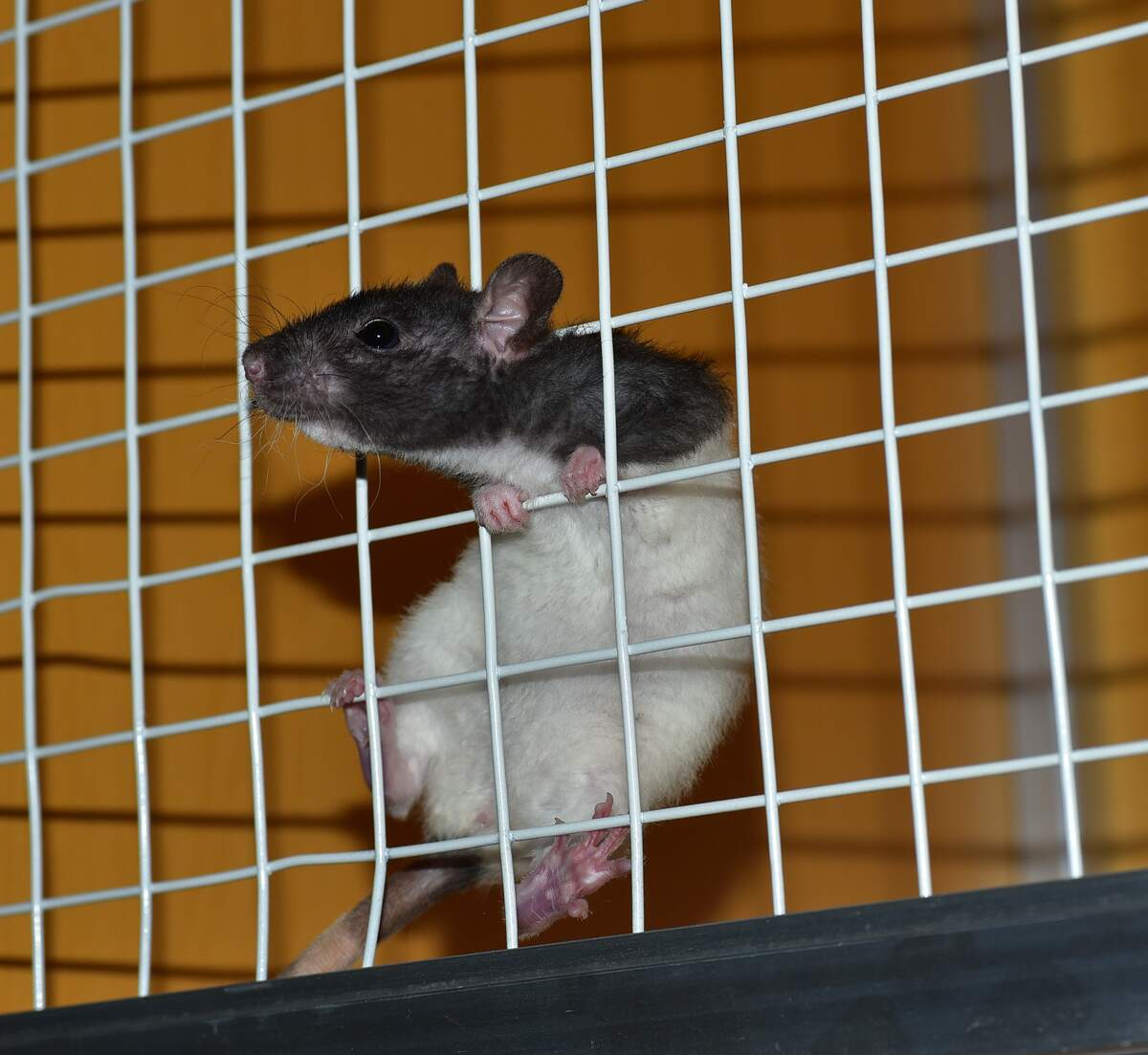 Image for World Day for Laboratory Animals