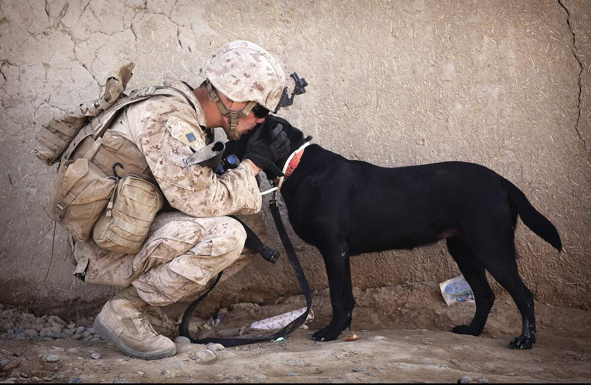 Image for National Pets for Veterans Day