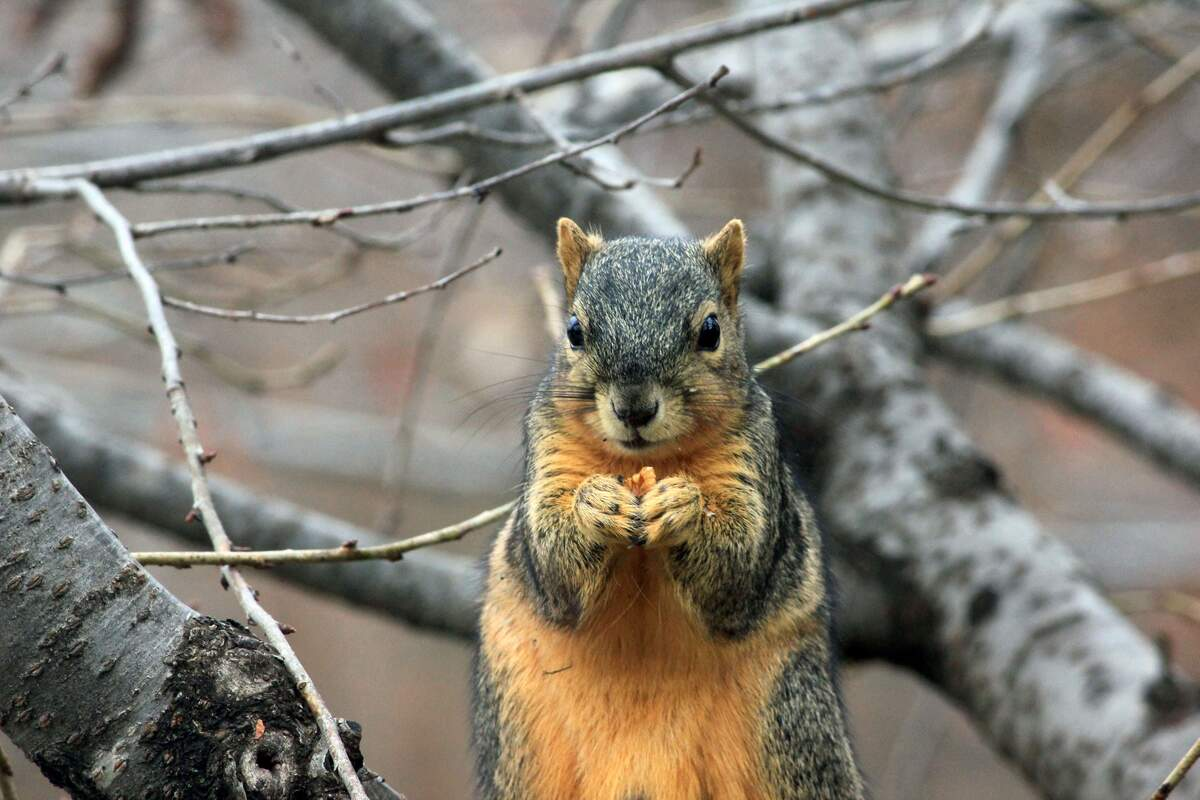 Image for National Squirrel Awareness Month