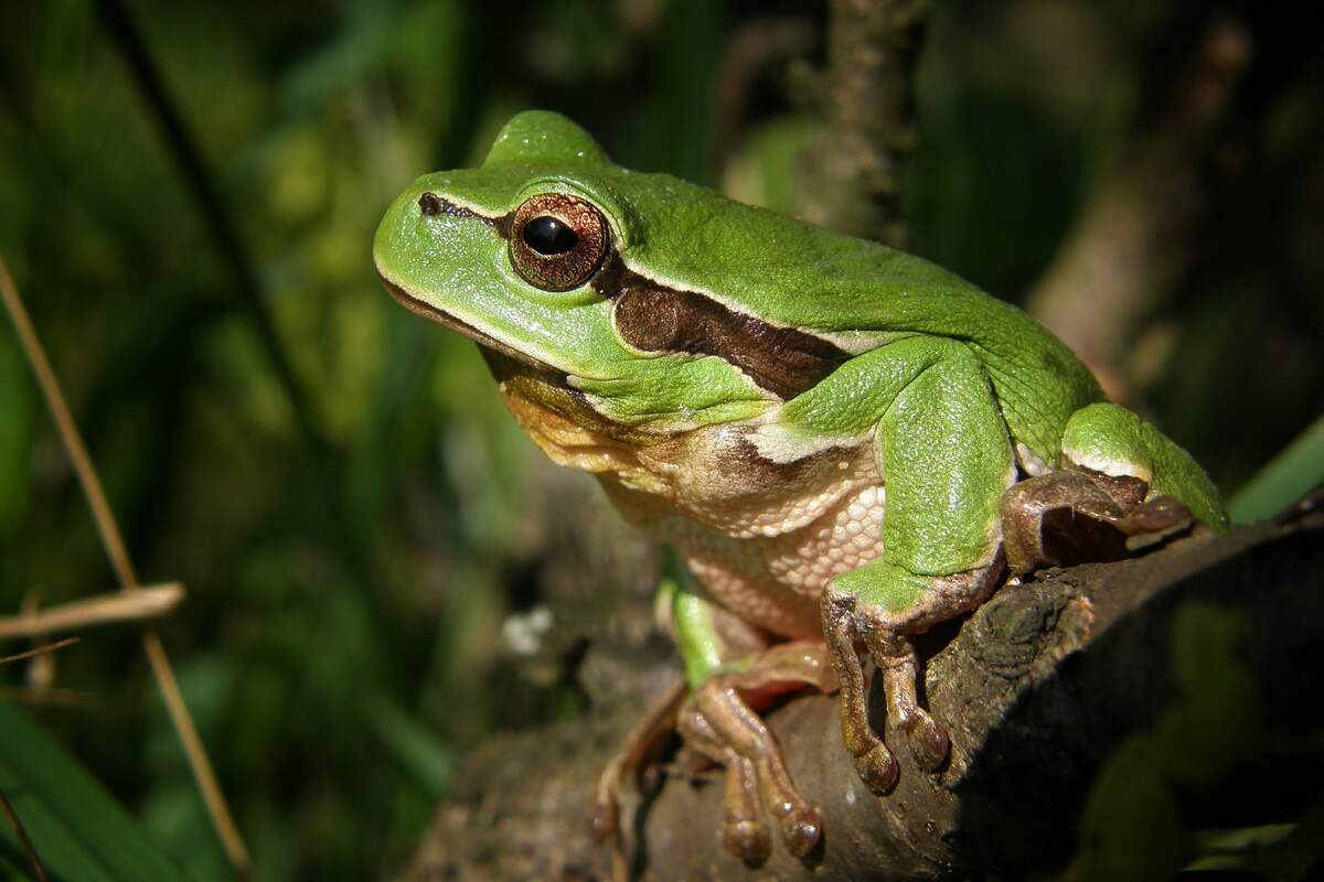 Image for National Frog Month