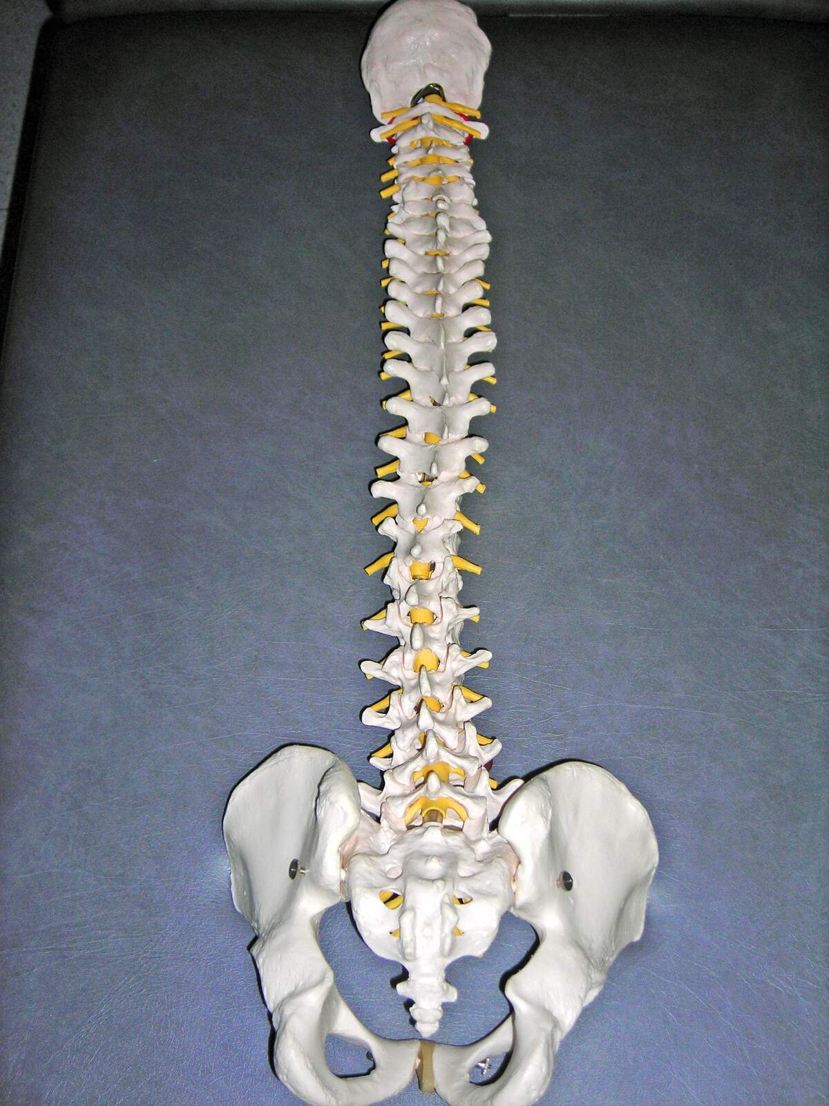 Image for World Spine Day