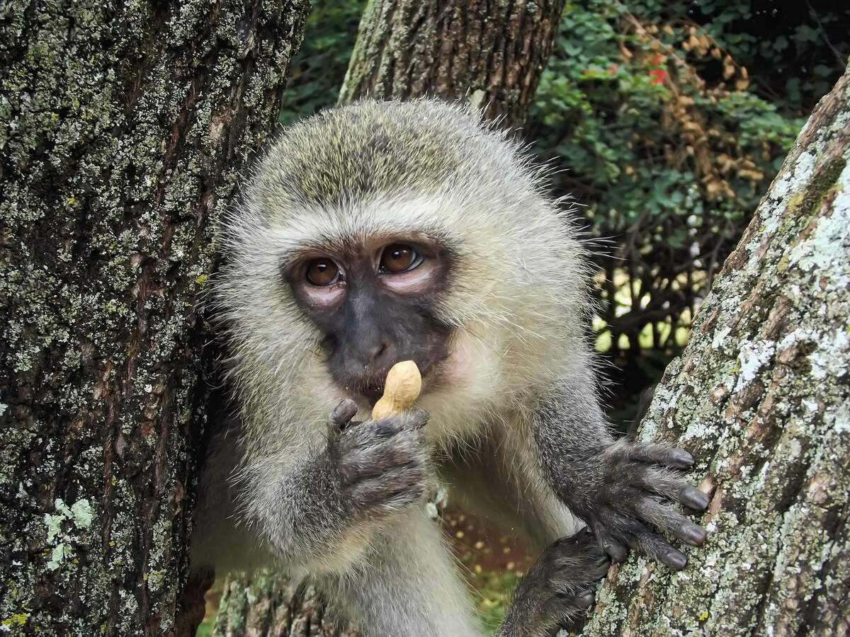 Image for Monkey Day