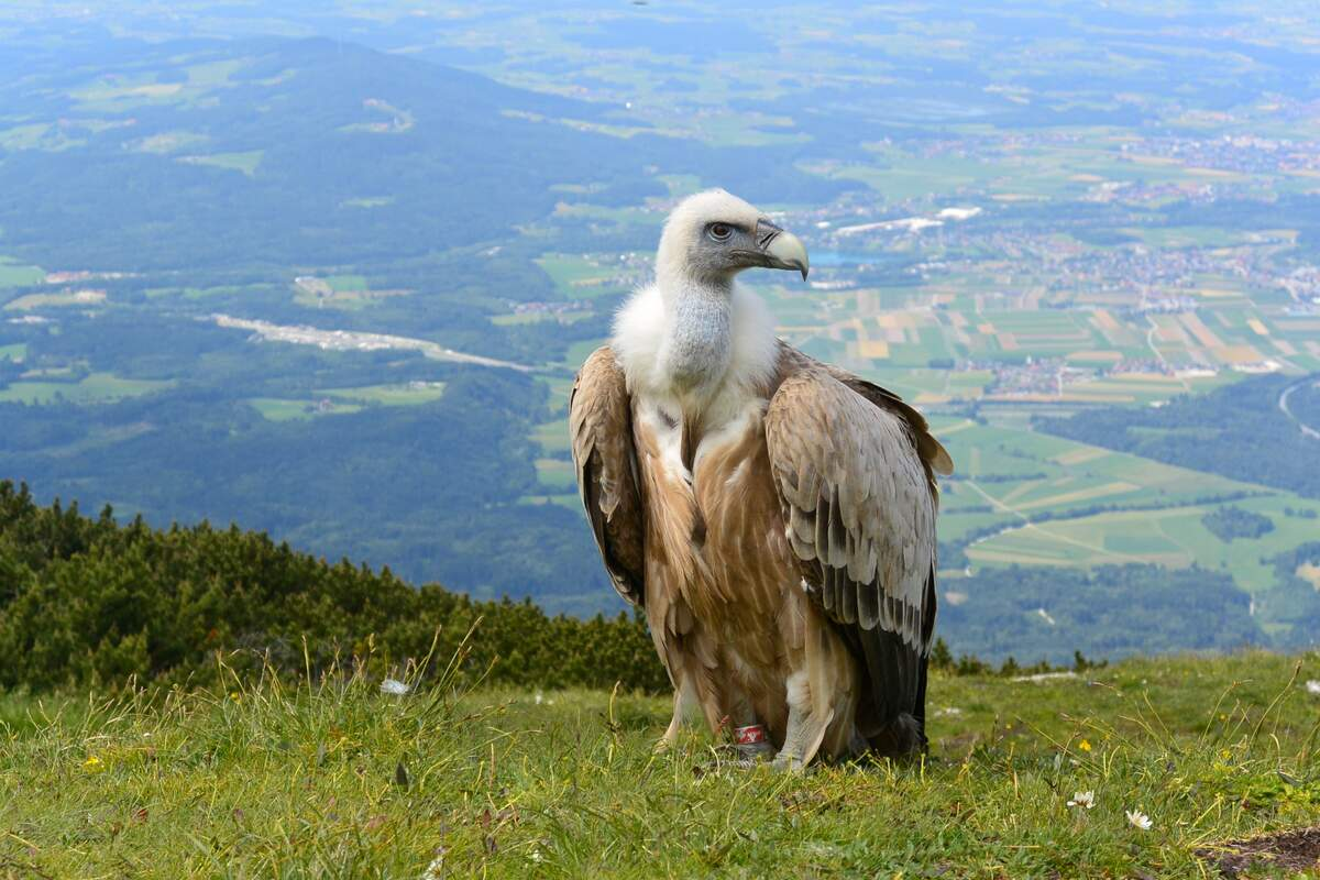 Image for International Vulture Awareness Day