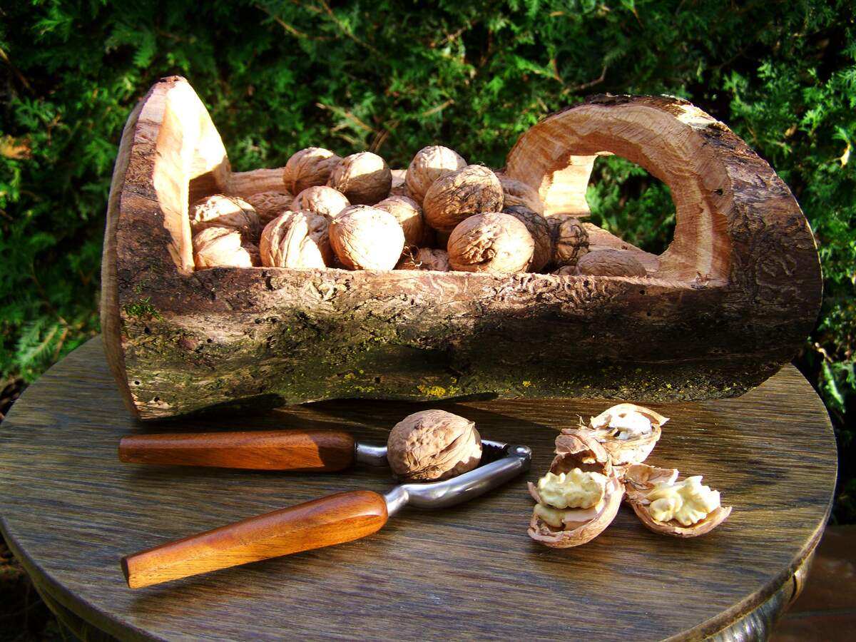 Image for National Walnut Day
