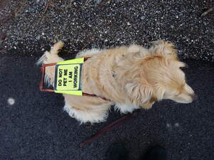Image for Assistance Dog Day
