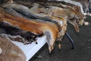 Image for Fur Free Friday