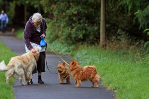 Image for Walking the Dog Day