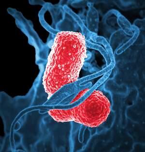 Image for World Pneumonia Day