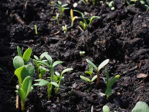 Image for World Soil Day