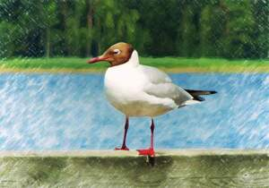 Image for Draw a Picture of a Bird Day