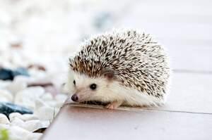 Image for Hedgehog Day