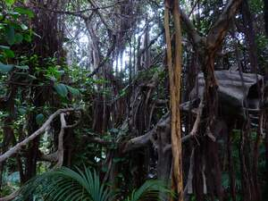 Image for Rainforest Day