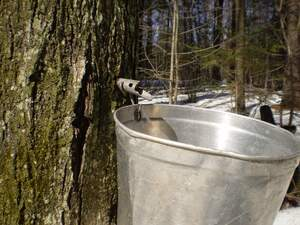Image for Maple Syrup Saturday