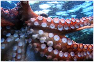 Image for World Octopus Day