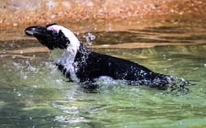 Image for World Penguin Day