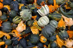 Image for National Acorn Squash Day